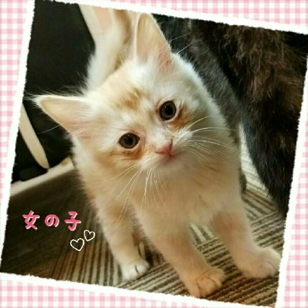 http://www.gurutto-iwaki.com/db_img/cl_img/1535/news/images/app_9PFPex_201607140833.jpg