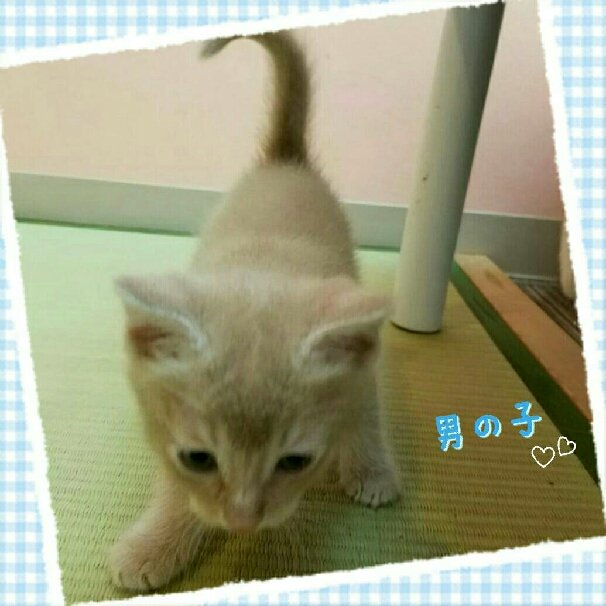 http://www.gurutto-iwaki.com/db_img/cl_img/1535/news/images/app_V0hDD3_201607140833.jpg