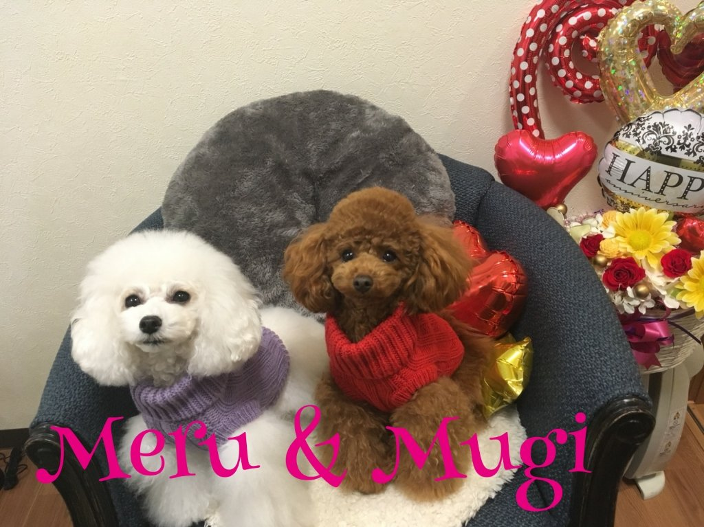 http://www.gurutto-iwaki.com/db_img/cl_img/1887/news/images/app_YwS14l_201802262213.jpg