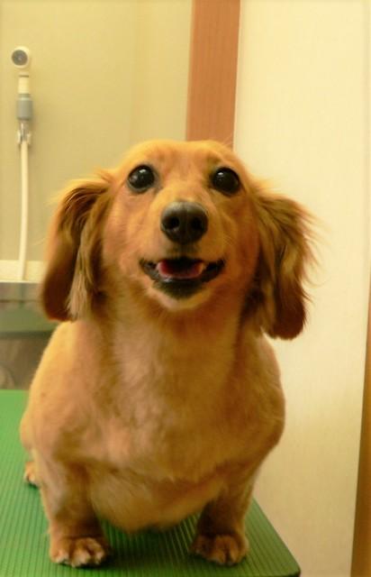 いわき市郷ヶ丘にある動物(どうぶつ)病院です。手術・ペットホテル・トリミング・予防接種・往診も可能です。