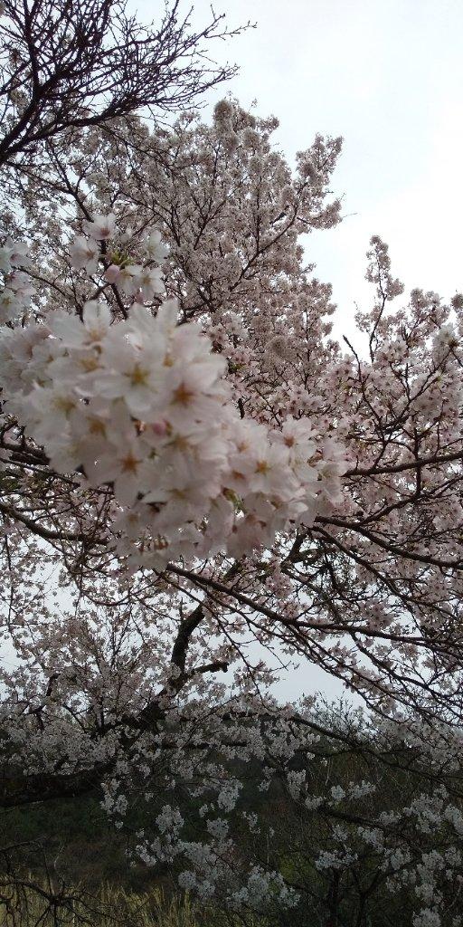 https://www.gurutto-iwaki.com/db_img/cl_img/1345/news/images/app_diNqT2_202104041107.jpg