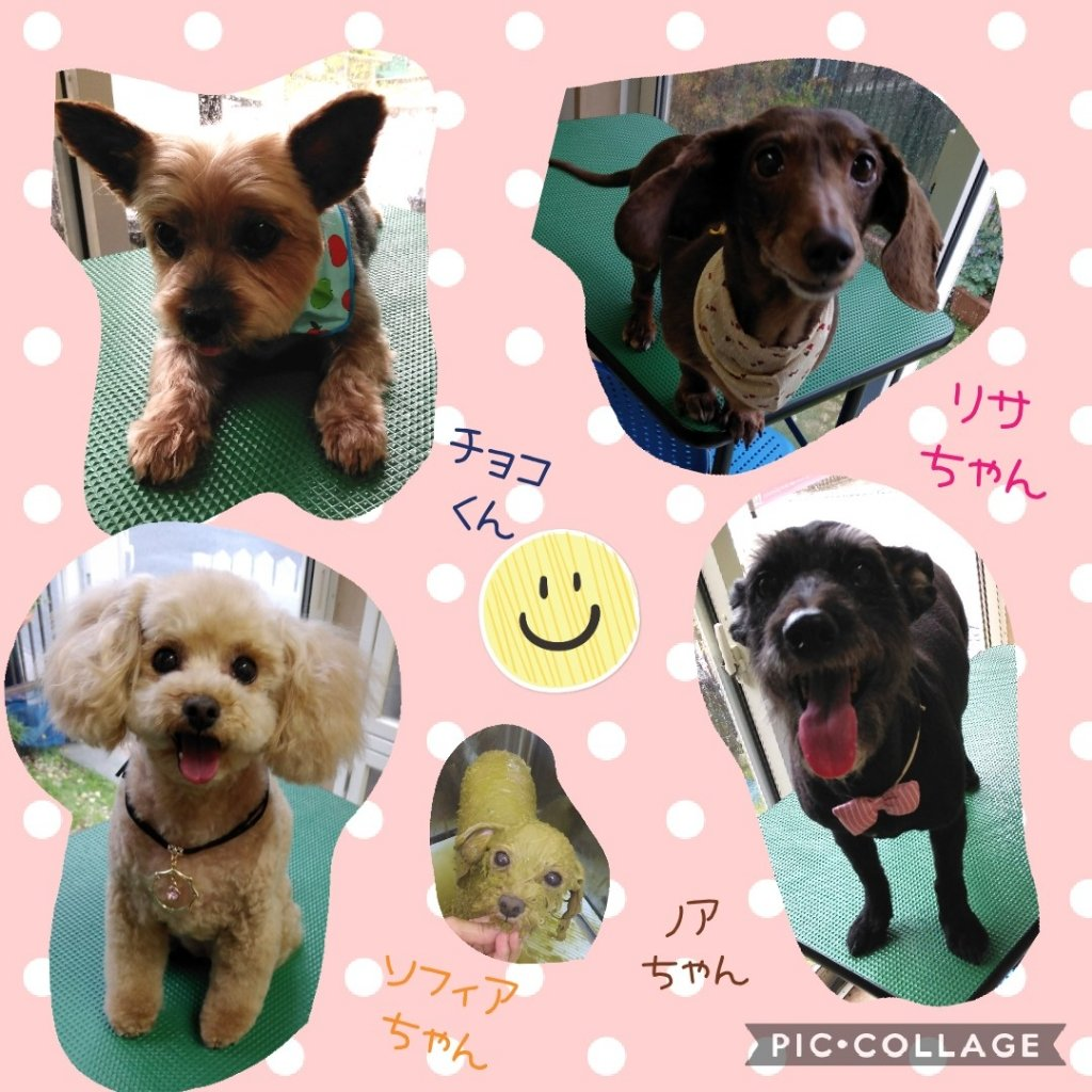 https://www.gurutto-iwaki.com/db_img/cl_img/1598/news/images/app_8PSTSG_202005192142.jpg
