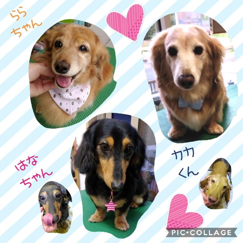 https://www.gurutto-iwaki.com/db_img/cl_img/1598/news/images/app_KfJbGl_202005122037.jpg