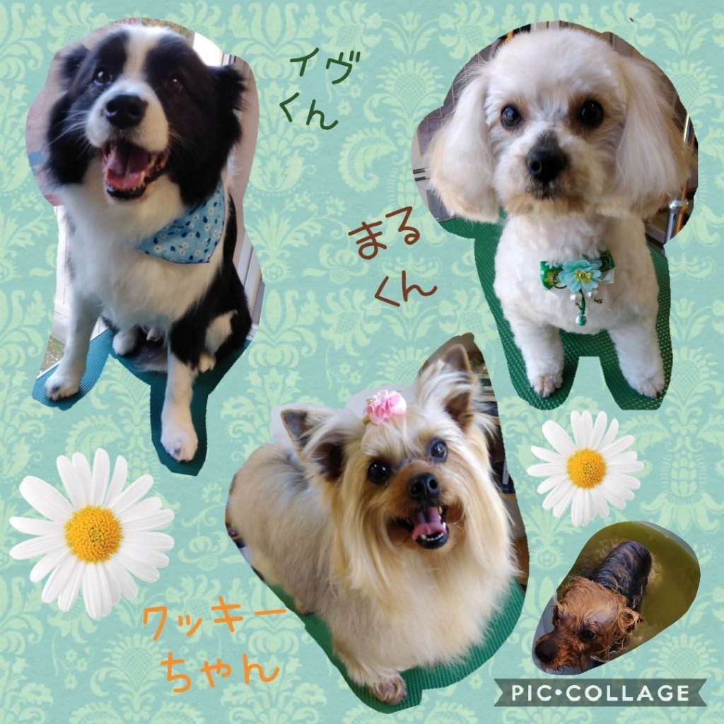 https://www.gurutto-iwaki.com/db_img/cl_img/1598/news/images/app_LNX3Lg_202003232134.jpg
