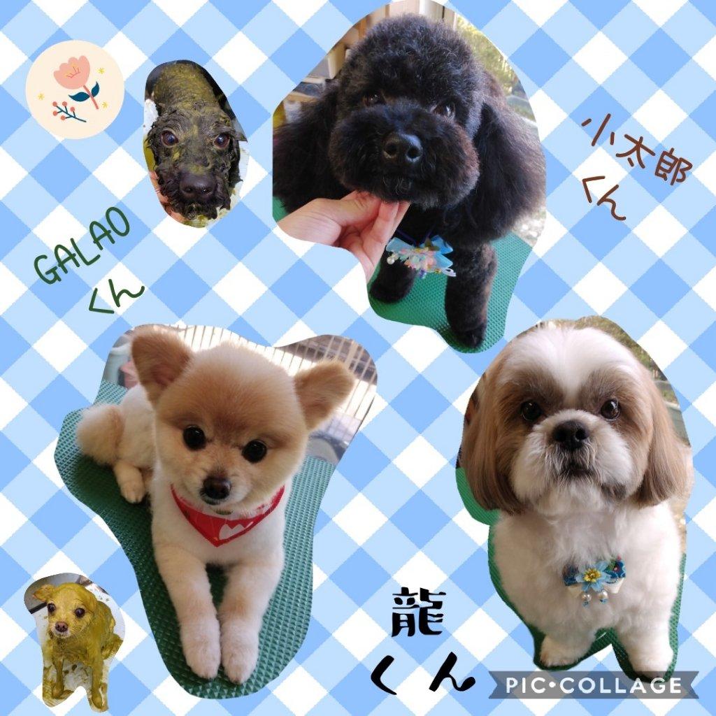 https://www.gurutto-iwaki.com/db_img/cl_img/1598/news/images/app_Ve7Yld_202003212153.jpg