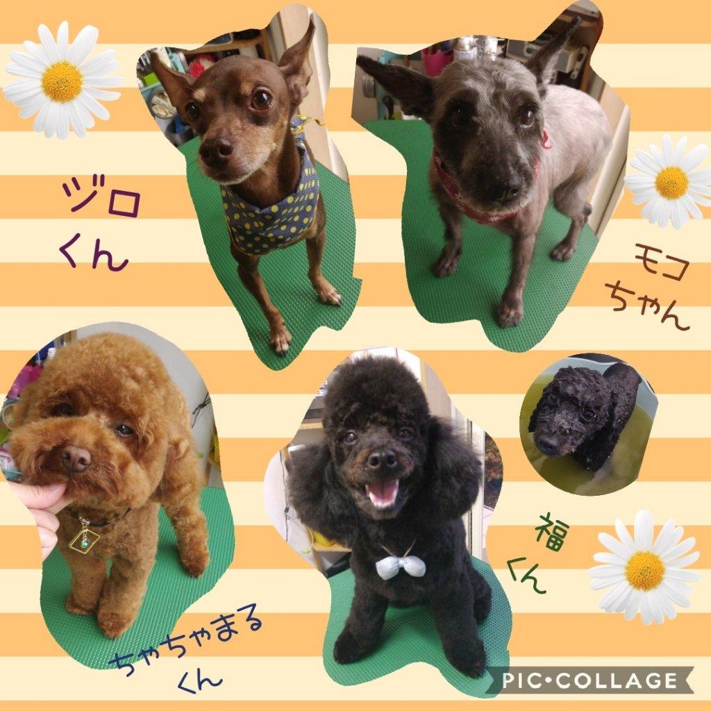 https://www.gurutto-iwaki.com/db_img/cl_img/1598/news/images/app_cUJMkO_202005182103.jpg