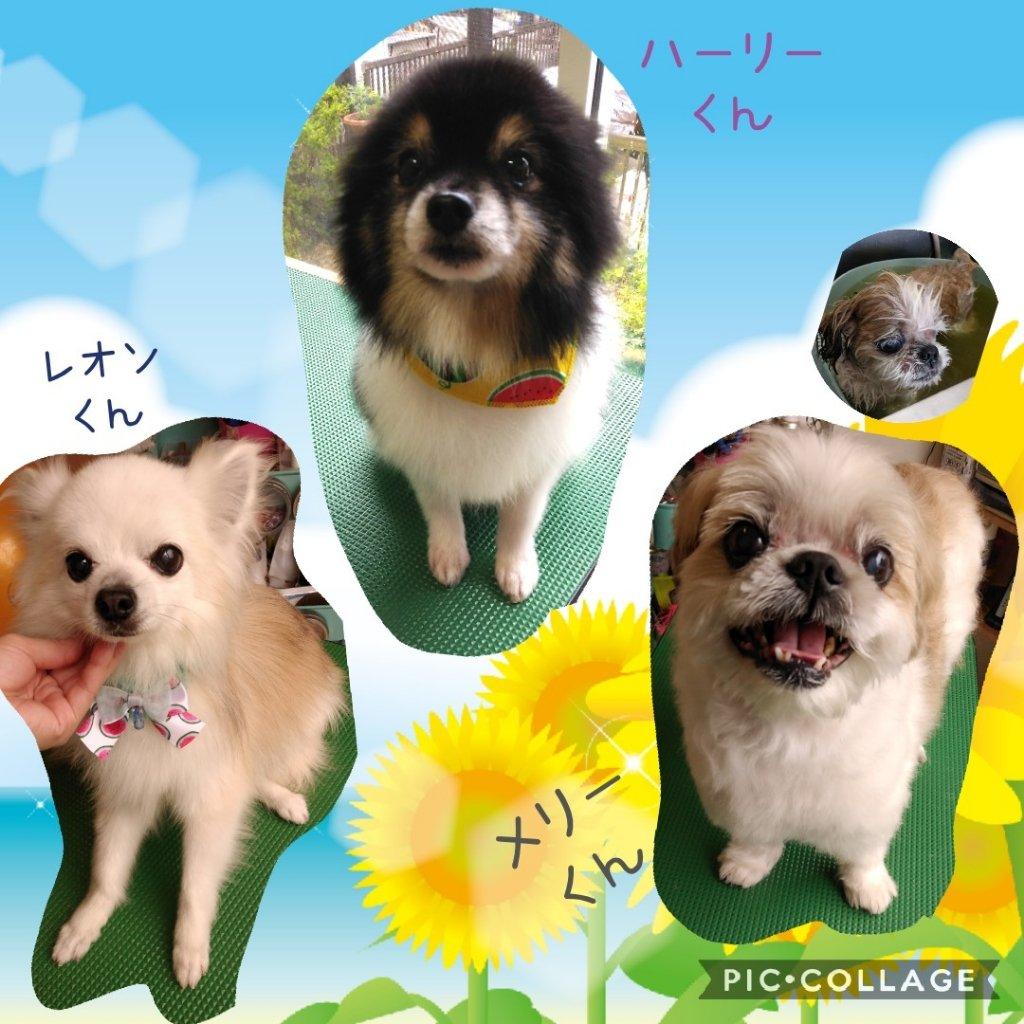 https://www.gurutto-iwaki.com/db_img/cl_img/1598/news/images/app_jaE7mU_202007271552.jpg