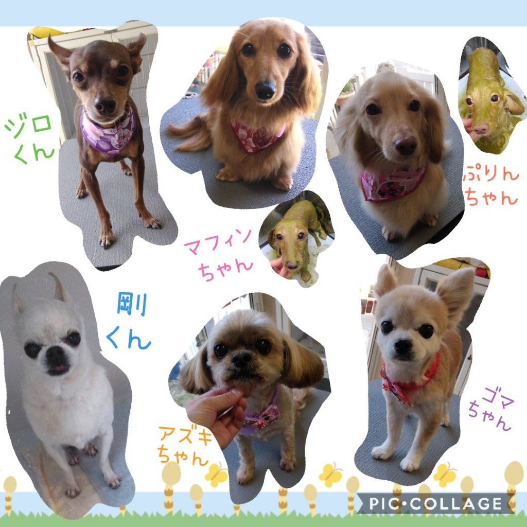 https://www.gurutto-iwaki.com/db_img/cl_img/1598/news/images/app_m2vYCe_202104071832.jpg