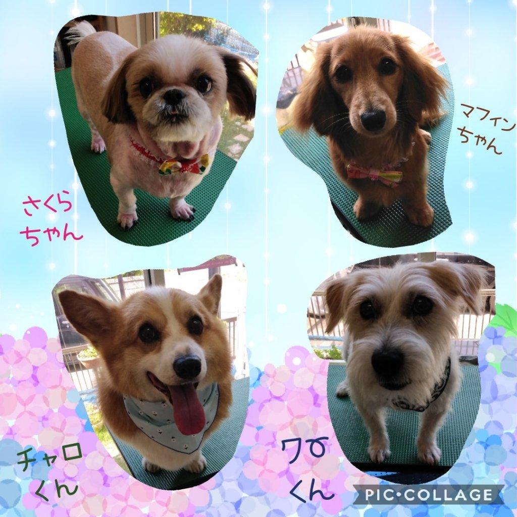 https://www.gurutto-iwaki.com/db_img/cl_img/1598/news/images/app_yY6rbw_202006152151.jpg