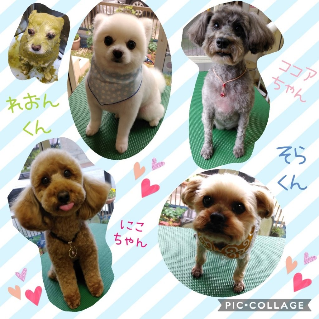https://www.gurutto-iwaki.com/db_img/cl_img/1598/news/images/app_zxR0IY_202006012013.jpg