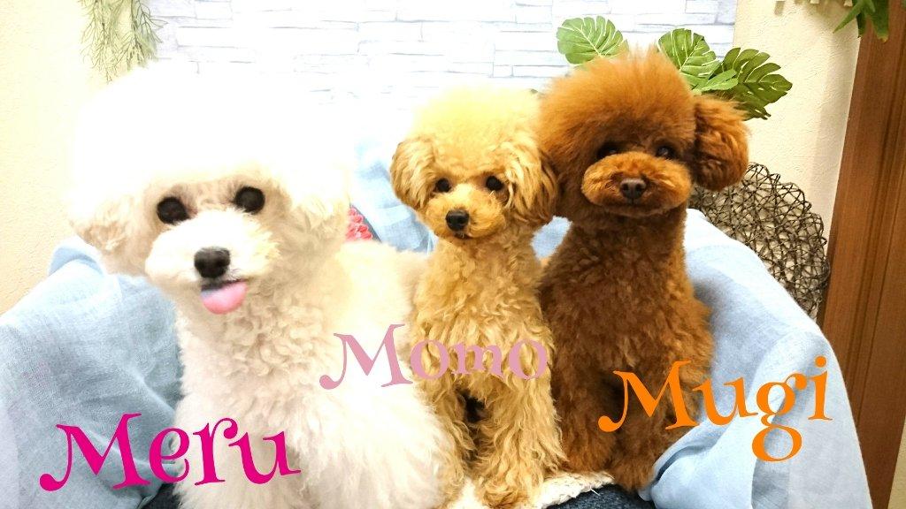 https://www.gurutto-iwaki.com/db_img/cl_img/1887/news/images/app_3SefCi_201905132155.jpg