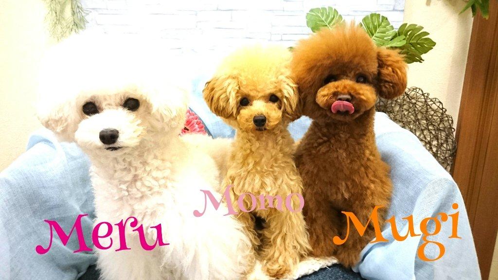 https://www.gurutto-iwaki.com/db_img/cl_img/1887/news/images/app_NImS1M_201905132155.jpg